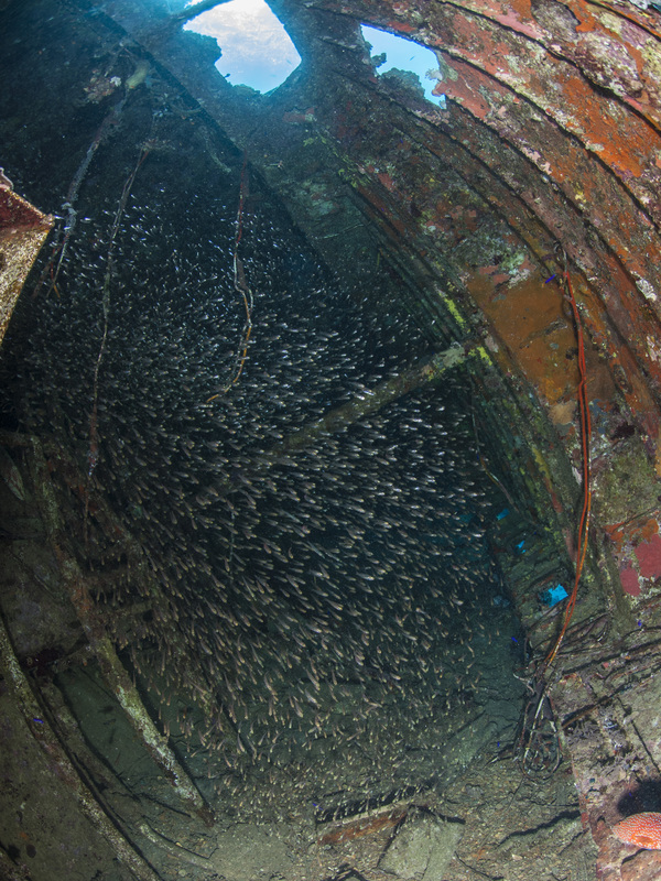 Glassfish in Wreck