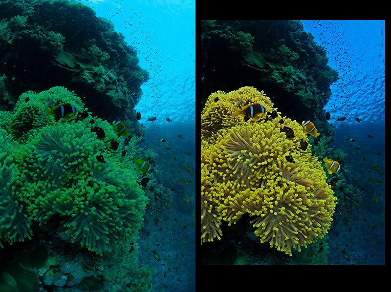 Anemone before/after © Bernd Nies