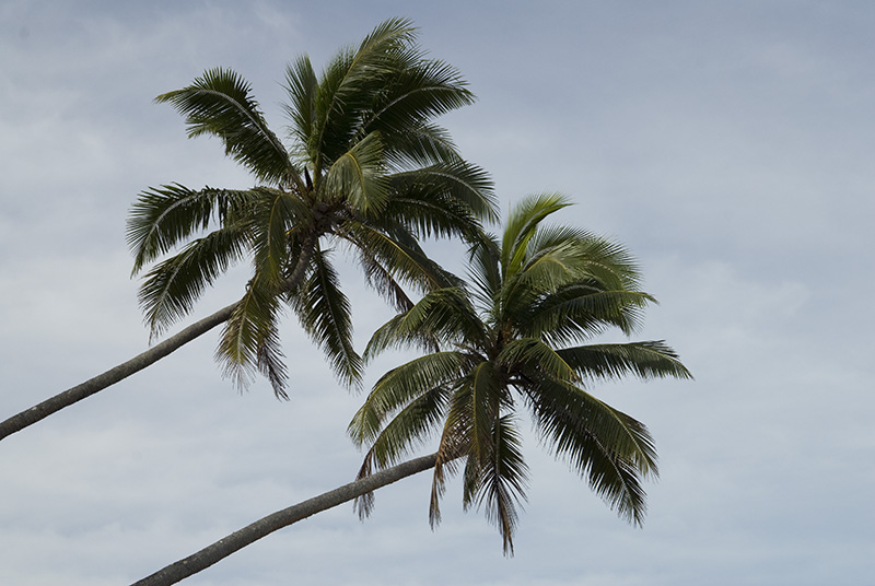 Image 7/123: Two Palms