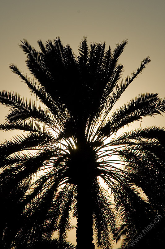 Image 17/46: Palm hiding Sun