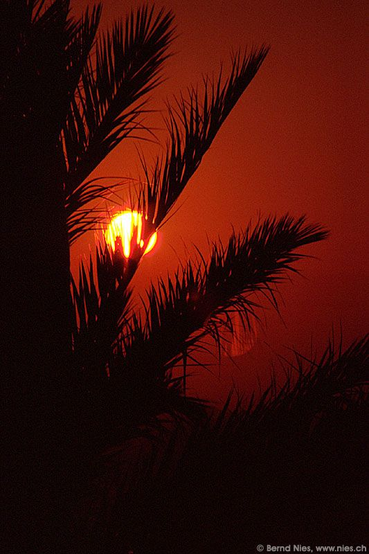Sunrise behind Palm