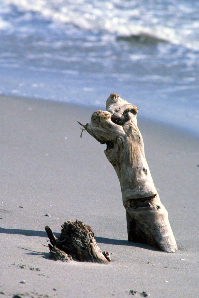 Image 3/39: Driftwood on a beach