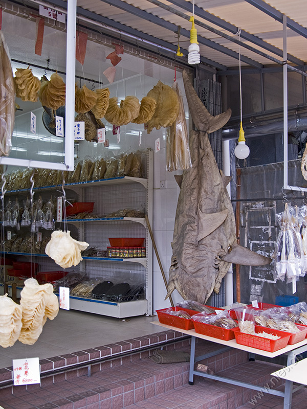 Dried Shark