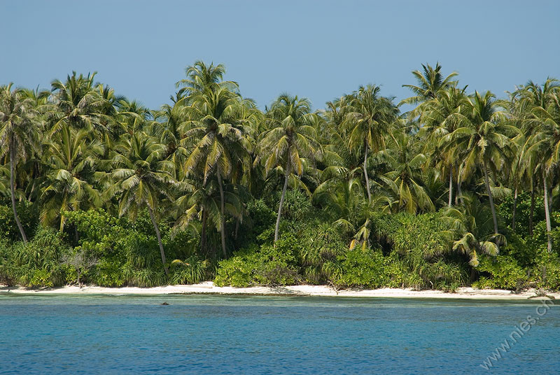 Dhigurah Palm Beach 1