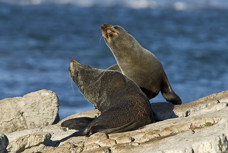 Two Seals