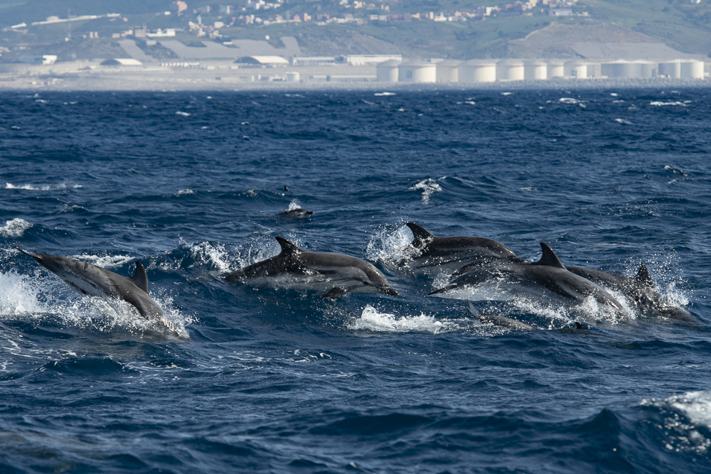 Jumping striped dolphins with fuel tanks