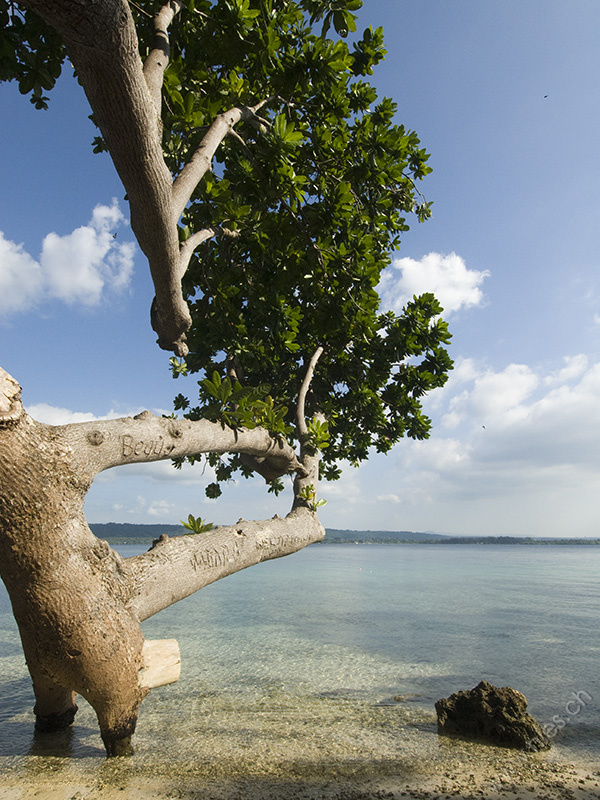 Beach with Tree