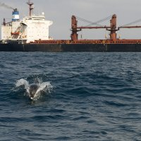 Dolphin with Freight Ship