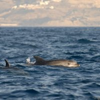 Two Bottlenose Dolphins