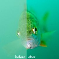 Perch before/after © Bernd Nies