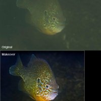 Sunfish before/after
