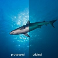 Shark Picture before/after © Bernd Nies