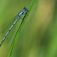 Dragonfly on Grass © Bernd Nies