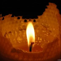 Bee wax candle © Bernd Nies