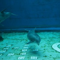 Imprisoned Dolphins
