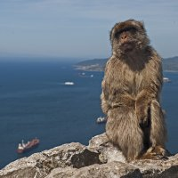Monkey with a View