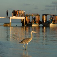 Heron with Jetty