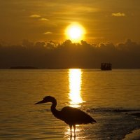 Sunset with Heron