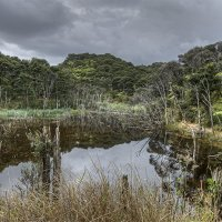 Image 6/194: Pond in a Jungle