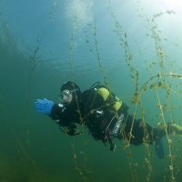 Diver in water plants 2