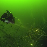 Diver with Branch