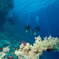 Divers and soft coral